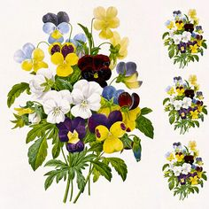 Pansy ceramic decal, pansies ceramic decal, pansy decal, pansies, flower decal, pansies ceramic transfer, botanical, 1400-1562 ºF, 750-850ºC door StainedGlassElements op Etsy
