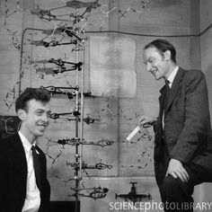 Watson and Crick discovered the chemical structure of DNA on February 28, 1953, at Cambridge University. #science #discovery