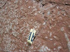 L'angolo della Geologia: Rosso Ammonitico Rocks And Minerals, Geology