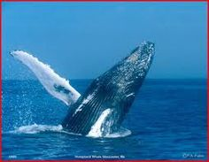 Whale watching, Gloucester, MA