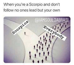 Scorpio Funny, Scorpio Zodiac Facts, Zodiac Sign Traits, Scorpio Horoscope, Zodiac Memes, My Zodiac Sign, Zodiac Quotes, Zodiac Funny, Scorpio Star Sign