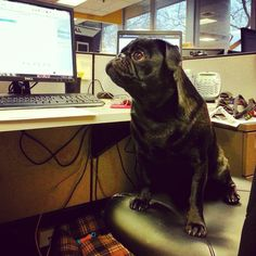 Bringing your best friend to the office? Take the Pets at Work Pledge!