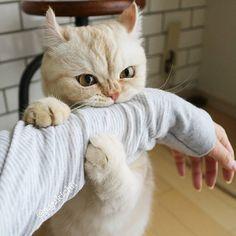 Cat biting my arm