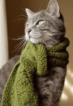 kitty need cat scarf I Love Cats, Cute Cats, Funny Cats, Adorable Kittens, Beautiful Cats, Animals Beautiful, Cute Animals, Baby Animals, Beautiful Things