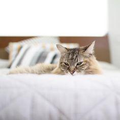 Leave me alone. It's #caturday @tabbyjamesco
