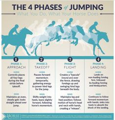 The 4 phases of jumping