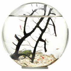 biosphere. My son has one of these. A completely contained self-supporting eco system.  I love to watch the little shrimp swim around.