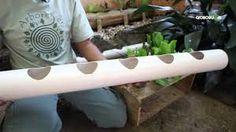 Resultado de imagem para como plantar em paletes de maçã