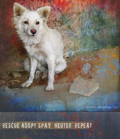 """street dog animal rescue poster"" by R Christopher Vest, Dolores, Colorado // living on the street is hard for dogs, the life is fraught with hunger, abuse and risks of injury and sickness. this sweet lady was rescued, but the long term key to helping is effective spaying and neutering. // Imagekind.com -- Buy stunning fine art prints, framed prints and canvas prints directly from independent working artists and photographers."