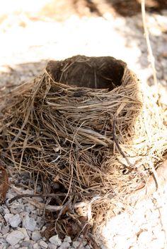 Bird Nest; beautiful!