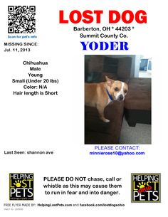 Lost Dog - Chihuahua - Barberton, OH, United States