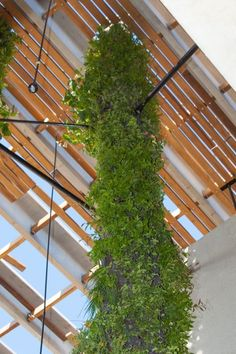 Perez Art Museum Miami Gets Its Incredible Hanging Gardens - Supported by Ronstan Tensile Architecture Tie Rods and Struts