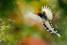 Birds of paradise | Bee Alerts