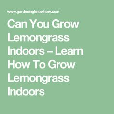 Can You Grow Lemongrass Indoors – Learn How To Grow Lemongrass Indoors