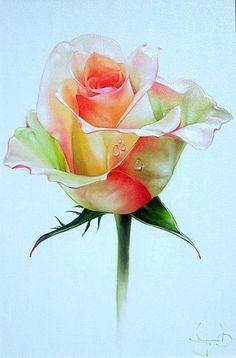 Kvety Hijab hijab o que Art Floral, Design Floral, Watercolor Rose, Watercolour Painting, Painting & Drawing, Watercolors, Botanical Art, Botanical Illustration, Plant Drawing