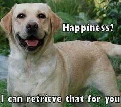 There seems to nothing that comes as easily to a Lab as happiness!