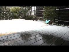 雪とねこ。-Snow and Maru.  (YouTube)