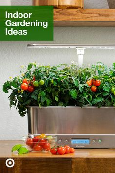 Dig into container gardening & find ideas for small indoor gardens, herbs, house plants & green decor. Vegetable Garden Planner, Indoor Vegetable Gardening, Container Gardening Vegetables, Indoor Garden, Herb Garden, Inside Garden, Inside Plants, Growing Veggies, Growing Plants