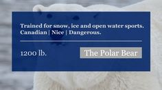 Beautiful beasts. #canada #bear #britishcolumbia #yukon #labrador #nunavut #alaska #fishing