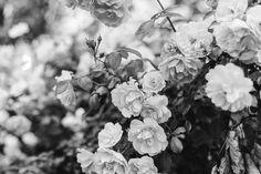 Micheile Henderson (@micheile) | Unsplash Photo Community