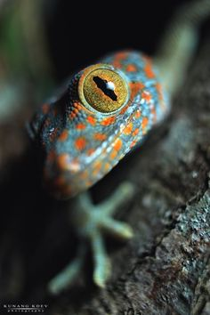 Colorful lizard closeup