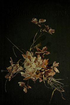 bd. 2 - Vilmorin's Blumengärtnerei. - Biodiversity Heritage Library