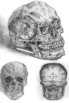An insider's look. Skull study made with graphite pencil.