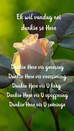 Good Morning Messages, Good Morning Greetings, Lekker Dag, Afrikaanse Quotes, Goeie Nag, Goeie More, Inspirational Qoutes, Special Quotes, Prayer Quotes