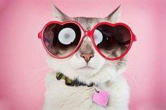 Süße Katzen mit Brillen - 22 lustige Bilder für echte Katzenliebhaber