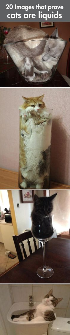 Why cats are liquids…#cat #humor #cats #funny #lolcats #meme #cute #quotes =^..^= www.zazzle.com/kittypretttgifts
