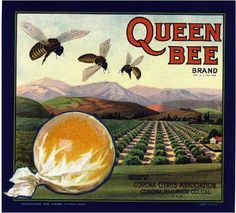 Corona Queen Bee - Dark Orange Citrus Crate Label Art Print