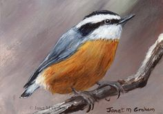 Red Breasted Nuthatch ACEO / Bird / Wildlife / Original Acrylic ACEO painting by Australian Artist Janet M Graham by ArtDownUnder on Etsy