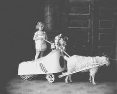 Child in a toga standing in a wagon decorated as a Roman chariot, and pulled by a sheep, ca. 1905-1915. This is probably a participant in a children's parade. #PhotoFriday #ORhistory