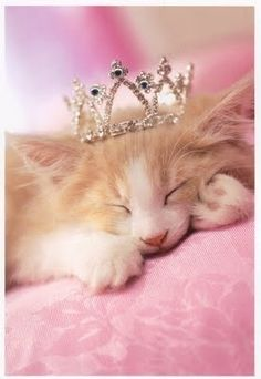Of course I'm a princess and this is my tiara!
