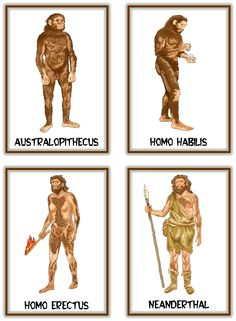 Recursos Infantiles: Proyecto Prehistoria Prehistoric Man, Prehistoric Animals, Human Evolution Tree, Homo Habilis, Early Humans, History Timeline, Stone Age, Historical Maps, Ancient Egypt