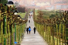 Desde la bici (Foto: Marcos Ferrer) Ideas Para, Vineyard, Outdoor, Driveways, Walks, Paths, Basque, Outdoors, Vine Yard