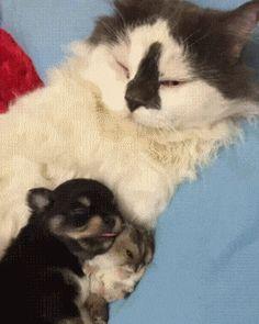 Cat Puppy Hamster