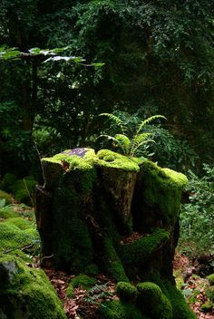 Esprit de la forêt Strange stroll in the heart of a dense, dark and calm forest, like in a Miyazaki Miyazaki, Foto Nature, Nature Nature, Woodland Garden, Walk In The Woods, Tree Stump, Shade Garden, Ferns, Mother Earth