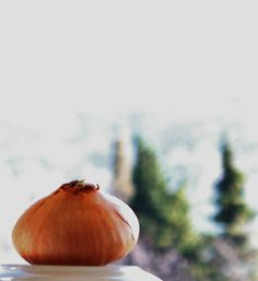 Onion with trees Onion, Vegetables, Trees, Photos, Roaches, Bows, Vegetable Recipes, Onions, Home Decor Trees