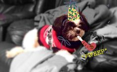 Picture of my Hank. Celebrating my Birthday.