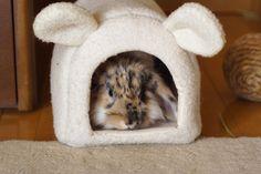 Bunny house <3