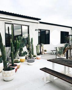 cacti farm • @thebeachpeople