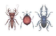 Beetles by V-L-A-D-I-M-I-R.deviantart.com on @DeviantArt