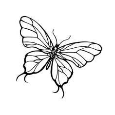 butterfly drawings | little gift from TattooMeNow :-)