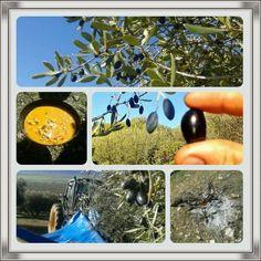 Un día de campo en #aceitesjuventud