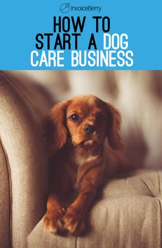23 Best From Dog Lover To Business Owner How To Succeed In A Dog