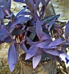 Green Tips, Best Indoor Plants, Houseplants, Diy Tutorial, Planting, Gardening Tips, Respect, Succulents, Drawers