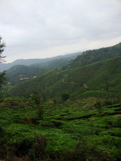 on the way to Mt. Chembra, Wayanad, Kerala, India