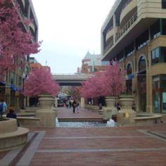 Georgetown <3