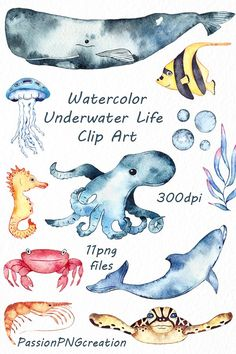 Watercolor Underwater Life Clipart by PassionPNGcreation on @creativemarket